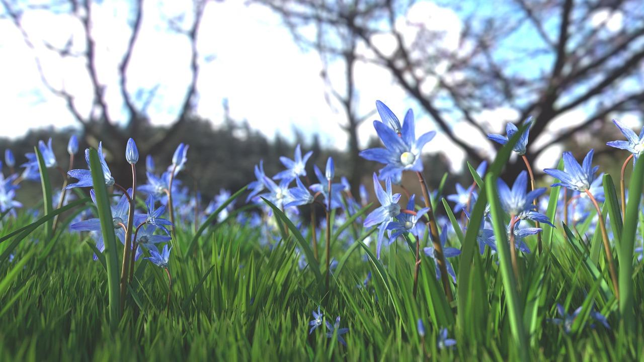 flower-1458229_1280